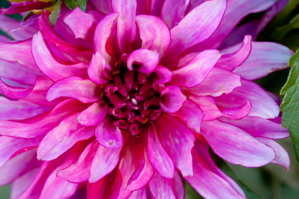 Purple Flower - Macro