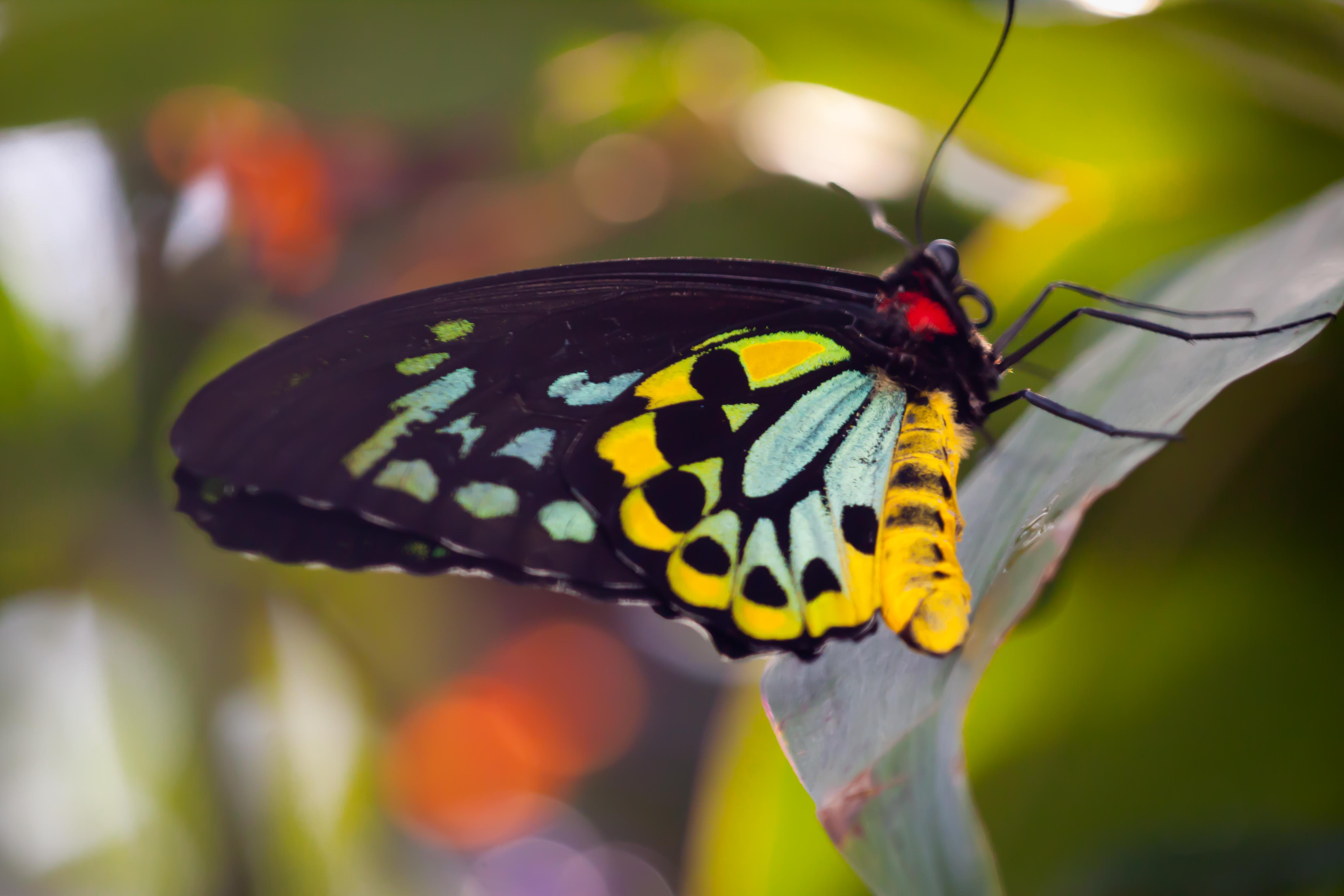 Jeff Finkelstein Photography Butterflies Photos