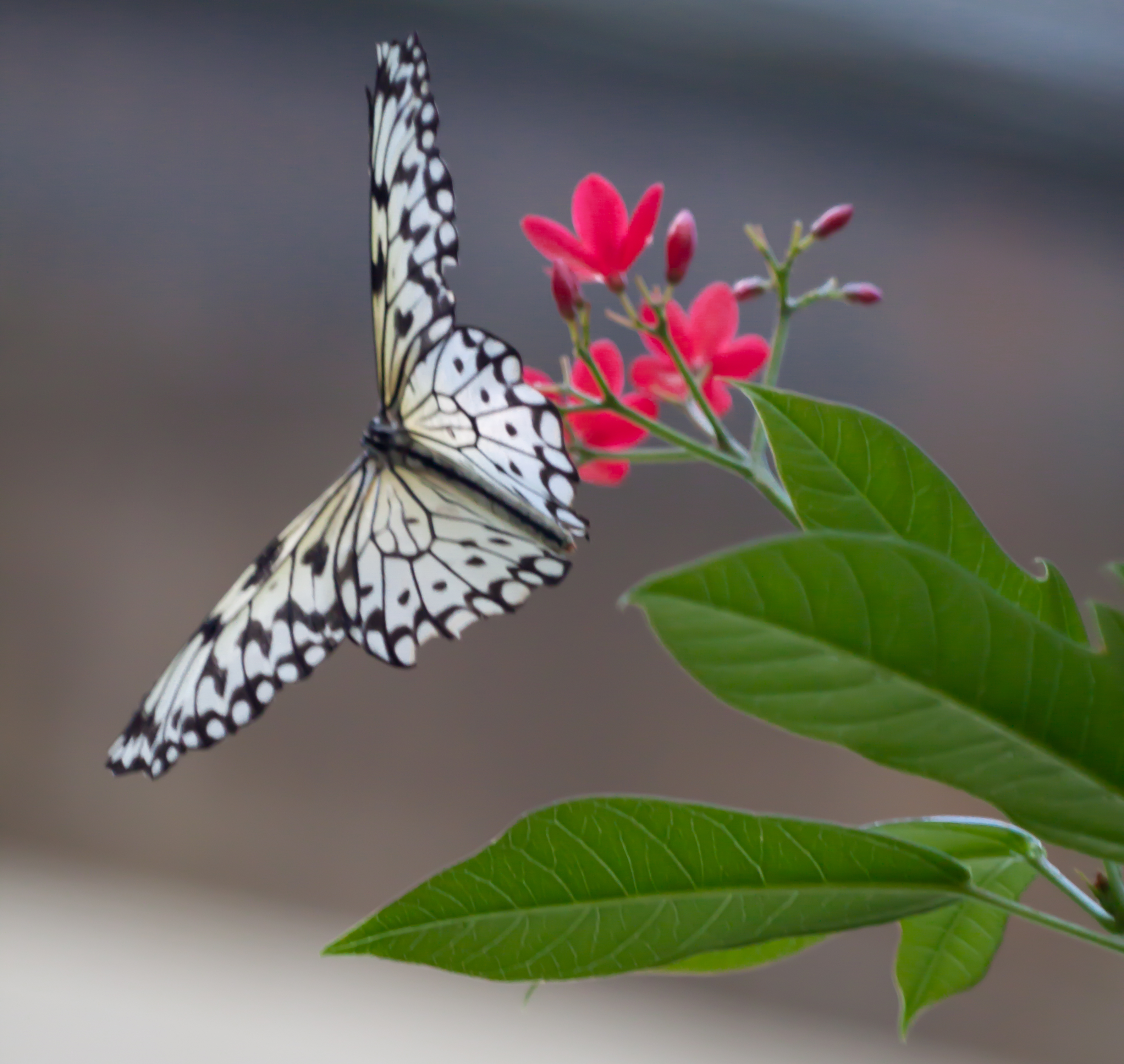 Butterfly flying away - photo#32