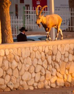 700-israel-2011-5641
