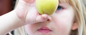 garden-fruit-9533