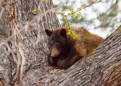 2048-Bear-Vassar-Drive-8620