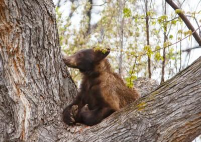 2048-Bear-Vassar-Drive-8686