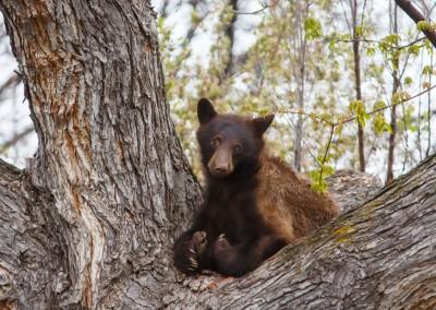 2048-Bear-Vassar-Drive-8690
