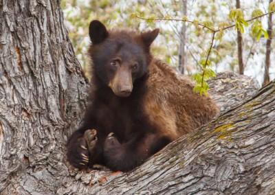 2048-Bear-Vassar-Drive-8694