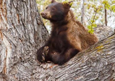 2048-Bear-Vassar-Drive-8701