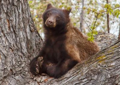 2048-Bear-Vassar-Drive-8705