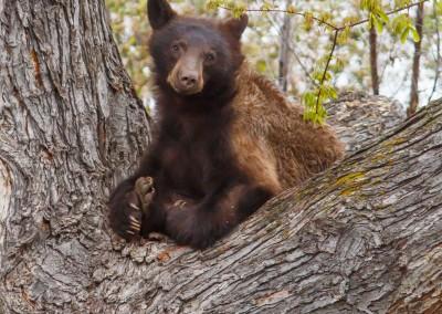 2048-Bear-Vassar-Drive-8709