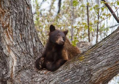 2048-Bear-Vassar-Drive-8716