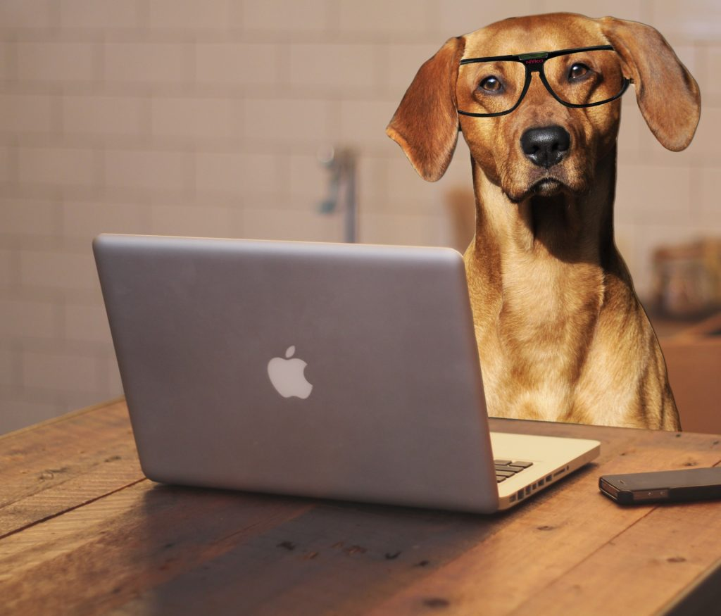 dog uses laptop computer