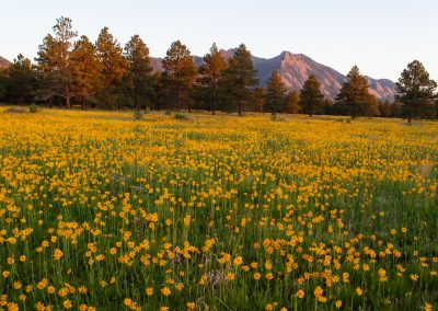 Customer Paradigm Photography - Boulder, Colorado  - Flatirons Vista Trail