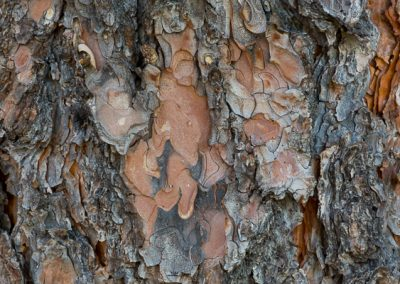 600-medical-product-photography-bark-texture-backgroiund